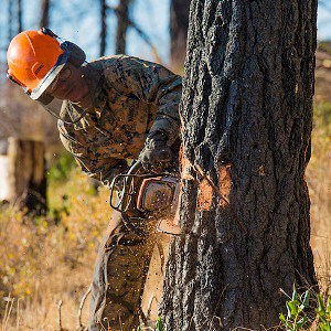 how to cut down a tree with a chainsaw featured